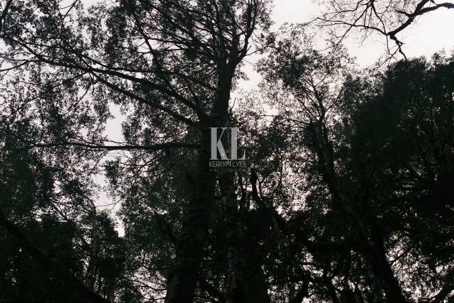 kirwanstrack3_withmark