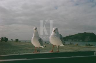 Car birds