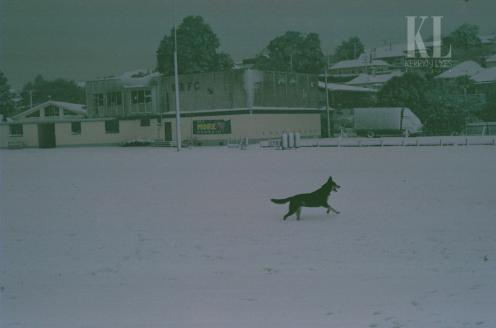 A stranger's dog