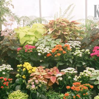In the tropics (greenhouse)