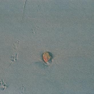 Paw prints around a rock