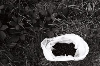 Black berries- white bag