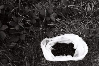 Black berries- white bag